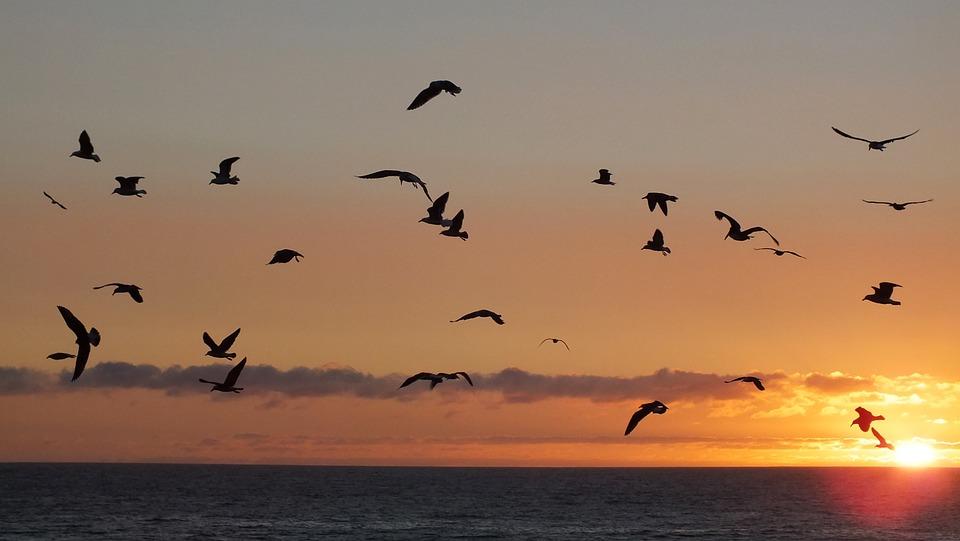 birds-943276_960_720